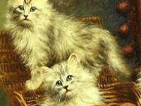 Игра Непослушные кошки