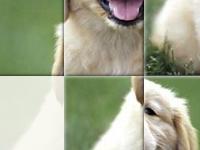 Игра Милая собака