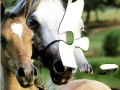 Игра Пазл лошади
