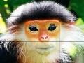 Игра Разгадай головоломку с обезьянкой
